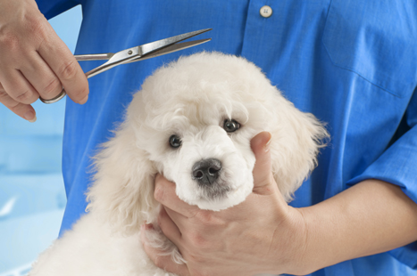 Make your pet look and feel better with good grooming.